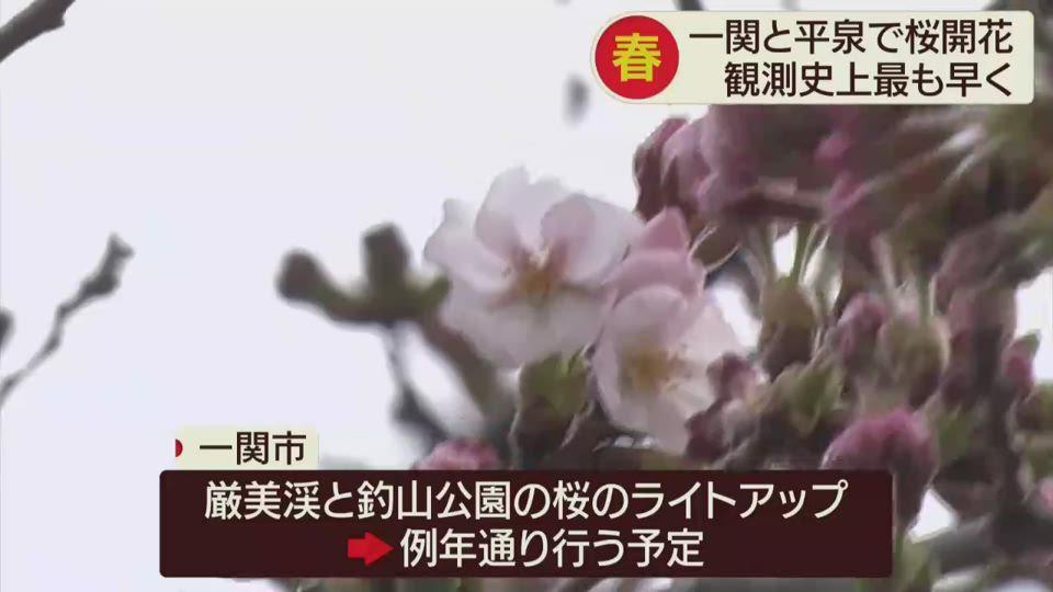 一関で桜の開花宣言