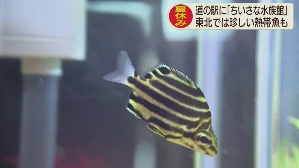 道の駅高田松原「ちいさな水族館」