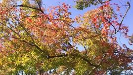 すっかり秋、そして冬へ