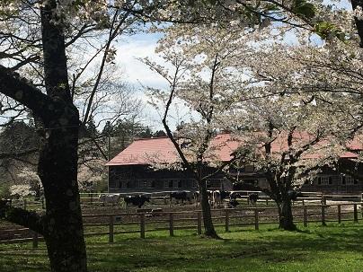 早くも、桜の開花の「予想」の便りが